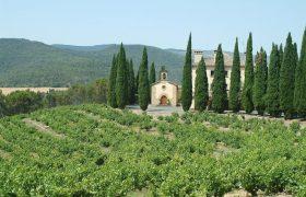 Bodega Señorío de Sarría - D.O. Navarra - El Viñedo